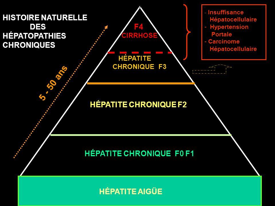 HÉPATITE CHRONIQUE F2 HÉPATITE CHRONIQUE F0 F1 F4 CIRRHOSE HISTOIRE NATURELLE DES HÉPATOPATHIES CHRONIQUES * * HÉPATITE CHRONIQUE F3 - Insuffisance Hé
