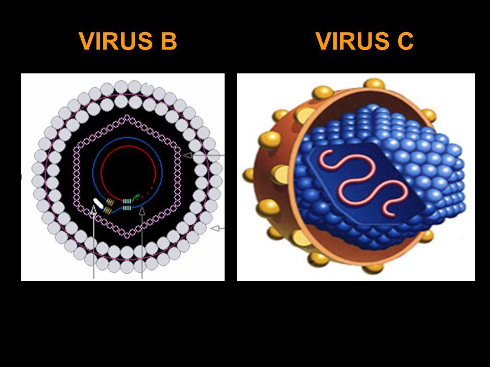 VIRUS CVIRUS B