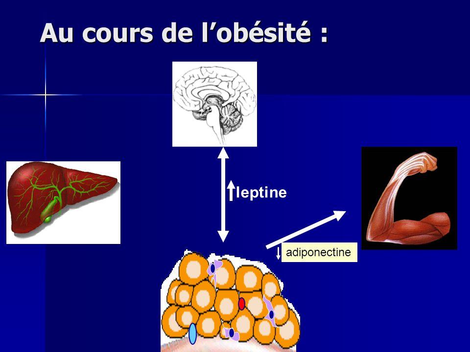 Au cours de lobésité : leptine adiponectine
