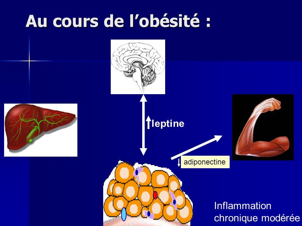 Au cours de lobésité : leptine adiponectine Inflammation chronique modérée