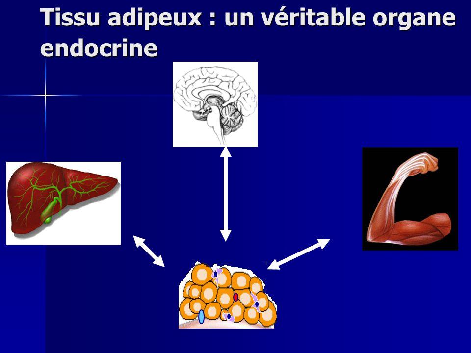 Tissu adipeux : un véritable organe endocrine