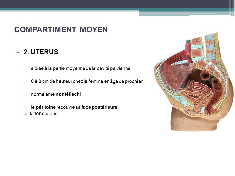 COMPARTIMENT MOYEN 2. UTERUS située à la partie moyenne de la cavité pelvienne 6 à 8 cm de hauteur chez la femme en âge de procréer normalement antéfl