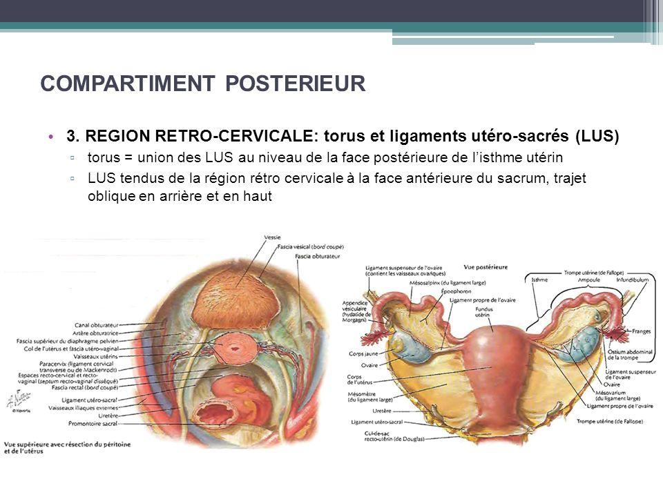 COMPARTIMENT POSTERIEUR 3. REGION RETRO-CERVICALE: torus et ligaments utéro-sacrés (LUS) torus = union des LUS au niveau de la face postérieure de lis