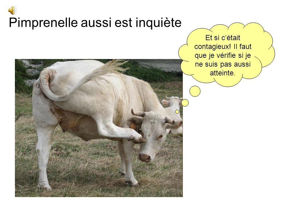 Marguerite est très inquiète Je vais de mal en pis! Le vétérinaire a dit que javais une mammite. On va me faire une prise de lait!