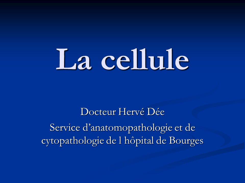 La cellule Docteur Hervé Dée Service danatomopathologie et de cytopathologie de l hôpital de Bourges