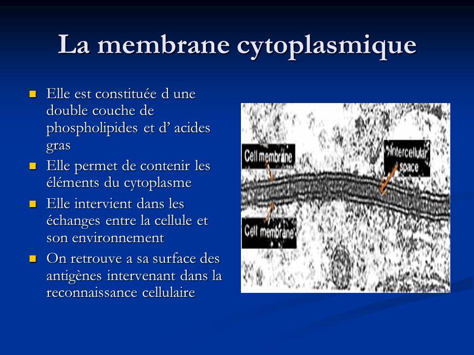 La membrane cytoplasmique Elle est constituée d une double couche de phospholipides et d acides gras Elle est constituée d une double couche de phosph