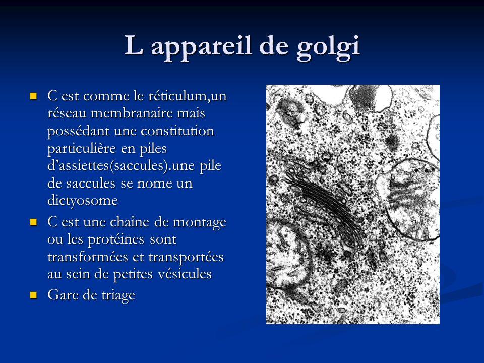 L appareil de golgi C est comme le réticulum,un réseau membranaire mais possédant une constitution particulière en piles dassiettes(saccules).une pile