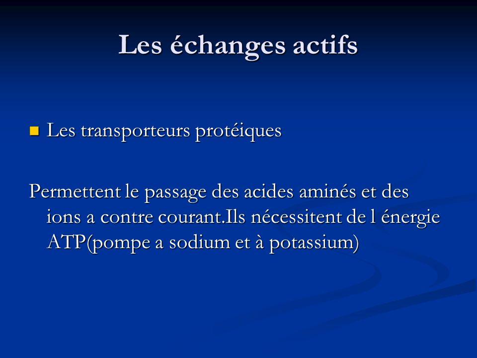 Les échanges actifs Les transporteurs protéiques Les transporteurs protéiques Permettent le passage des acides aminés et des ions a contre courant.Ils