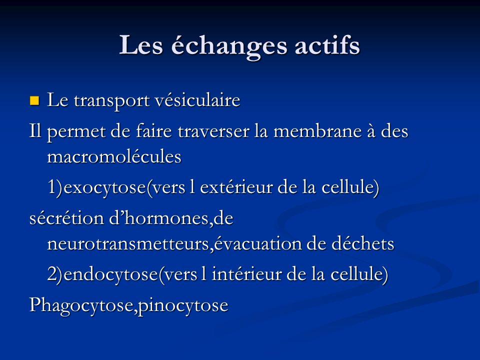 Les échanges actifs Le transport vésiculaire Le transport vésiculaire Il permet de faire traverser la membrane à des macromolécules 1)exocytose(vers l