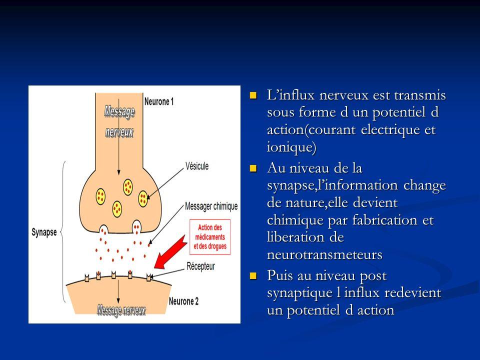 Linflux nerveux est transmis sous forme d un potentiel d action(courant electrique et ionique) Au niveau de la synapse,linformation change de nature,e