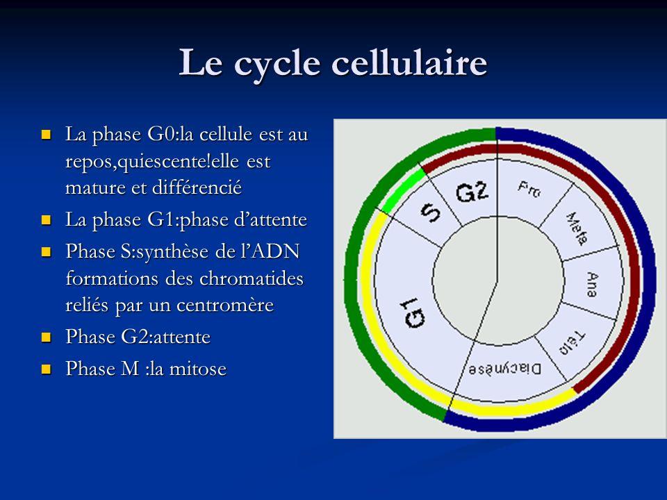 Le cycle cellulaire La phase G0:la cellule est au repos,quiescente!elle est mature et différencié La phase G0:la cellule est au repos,quiescente!elle