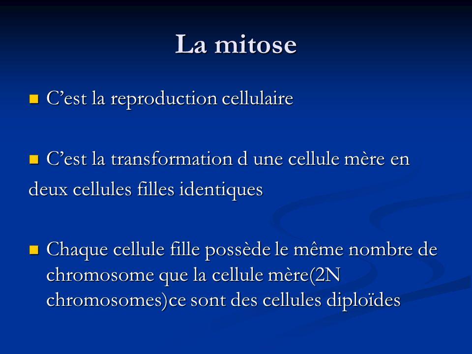 La mitose Cest la reproduction cellulaire Cest la reproduction cellulaire Cest la transformation d une cellule mère en Cest la transformation d une ce