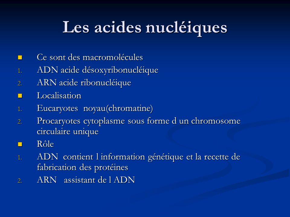 Les acides nucléiques Ce sont des macromolécules Ce sont des macromolécules 1. ADN acide désoxyribonucléique 2. ARN acide ribonucléique Localisation L