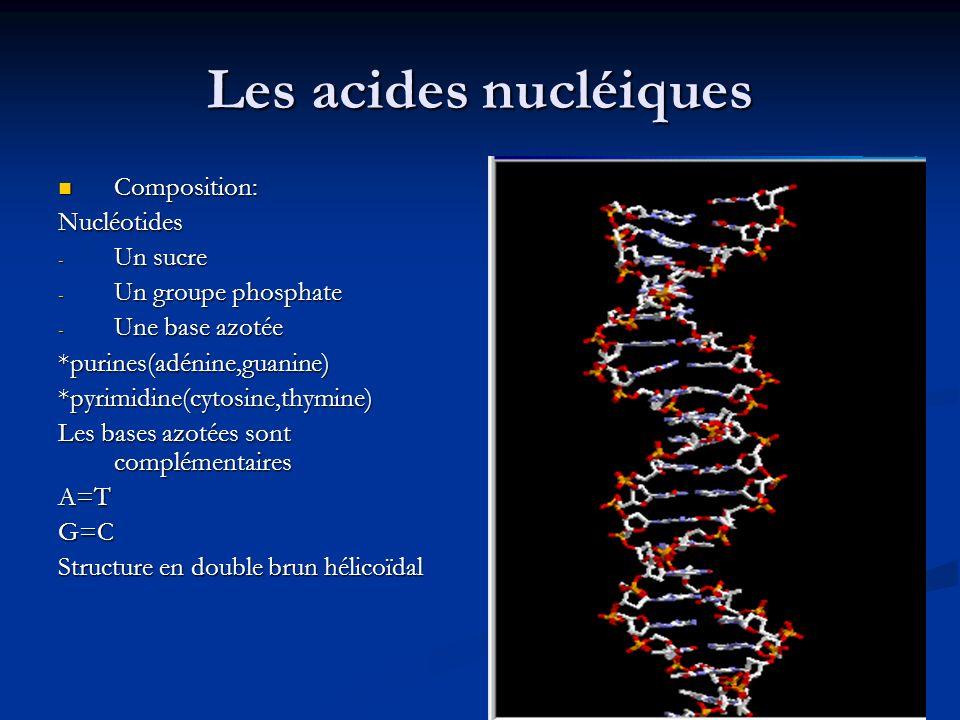 Les acides nucléiques Composition: Composition:Nucléotides - Un sucre - Un groupe phosphate - Une base azotée *purines(adénine,guanine)*pyrimidine(cyt