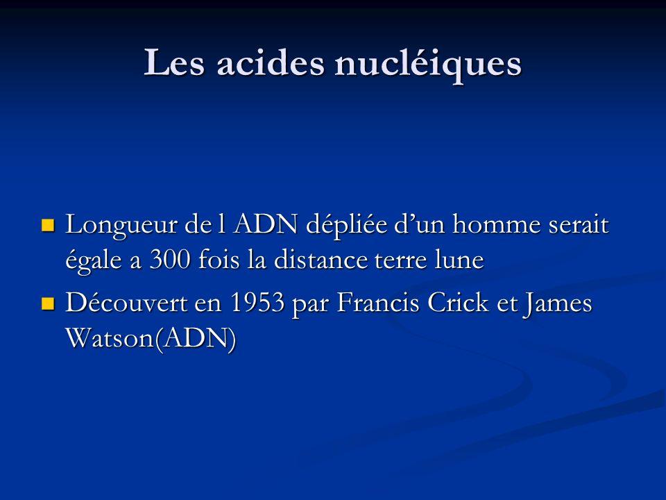 Les acides nucléiques Longueur de l ADN dépliée dun homme serait égale a 300 fois la distance terre lune Longueur de l ADN dépliée dun homme serait ég