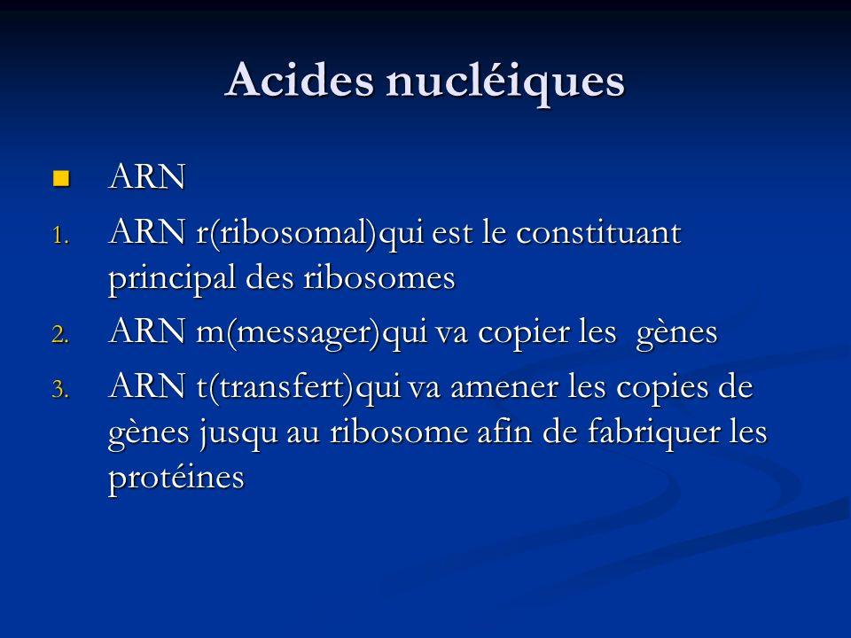 Acides nucléiques ARN ARN 1. ARN r(ribosomal)qui est le constituant principal des ribosomes 2. ARN m(messager)qui va copier les gènes 3. ARN t(transfe