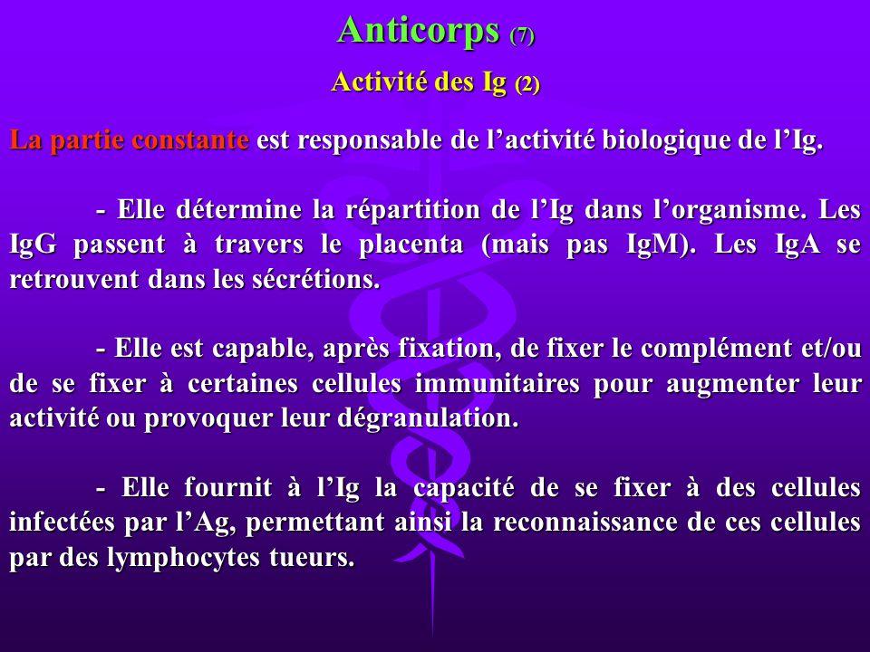 La partie constante est responsable de lactivité biologique de lIg. - Elle détermine la répartition de lIg dans lorganisme. Les IgG passent à travers