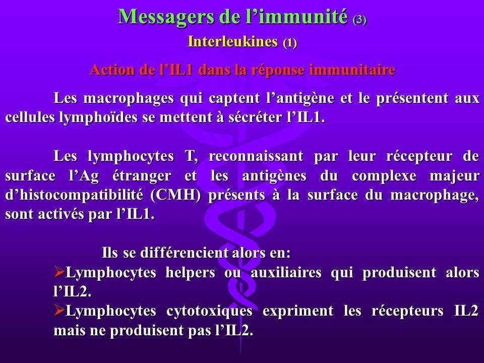 Messagers de limmunité (3) Interleukines (1) Action de lIL1 dans la réponse immunitaire Les macrophages qui captent lantigène et le présentent aux cel