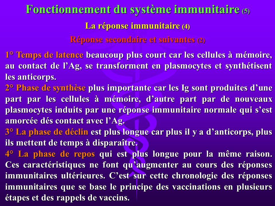 1° Temps de latence beaucoup plus court car les cellules à mémoire, au contact de lAg, se transforment en plasmocytes et synthétisent les anticorps. 2