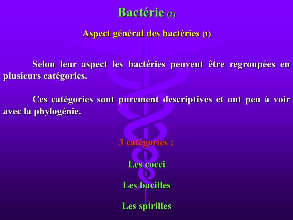 Aspect général des bactéries (1) Les cocci Les bacilles Les spirilles Selon leur aspect les bactéries peuvent être regroupées en plusieurs catégories.