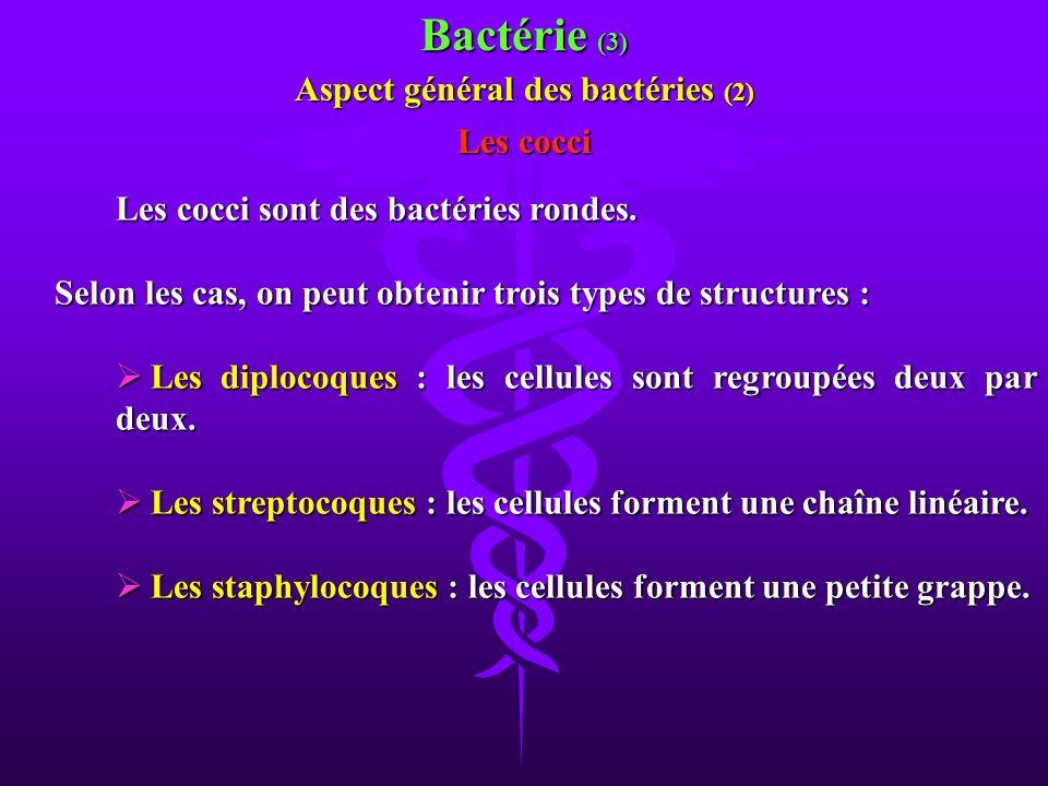 Les cocci sont des bactéries rondes. Selon les cas, on peut obtenir trois types de structures : Selon les cas, on peut obtenir trois types de structur
