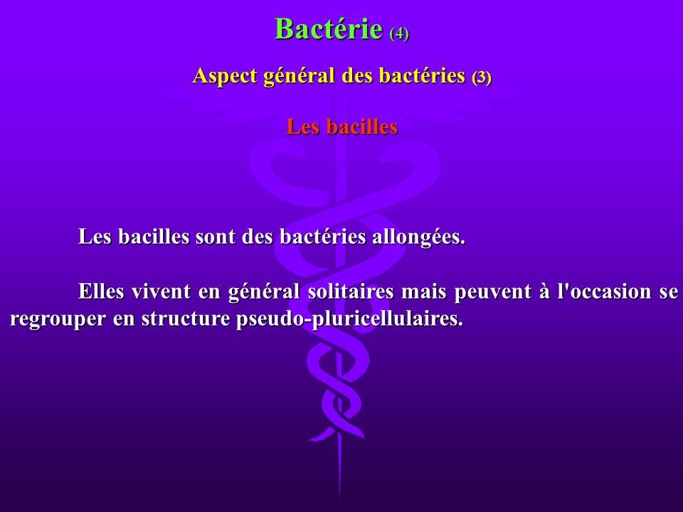 Les bacilles sont des bactéries allongées. Elles vivent en général solitaires mais peuvent à l'occasion se regrouper en structure pseudo-pluricellulai