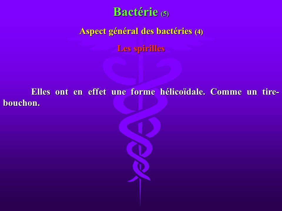Elles ont en effet une forme hélicoïdale. Comme un tire- bouchon. Les spirilles Aspect général des bactéries (4) Bactérie (5)