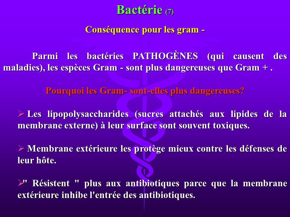 Parmi les bactéries PATHOGÈNES (qui causent des maladies), les espèces Gram - sont plus dangereuses que Gram +. Pourquoi les Gram- sont-elles plus dan