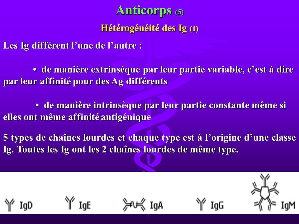 Anticorps (5) Hétérogénéité des Ig (1) Les Ig différent lune de lautre : de manière extrinsèque par leur partie variable, cest à dire par leur affinit