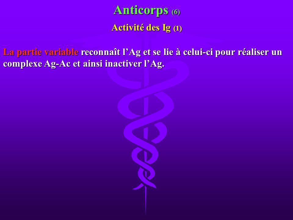 La partie variable reconnaît lAg et se lie à celui-ci pour réaliser un complexe Ag-Ac et ainsi inactiver lAg. Anticorps (6) Activité des Ig (1)