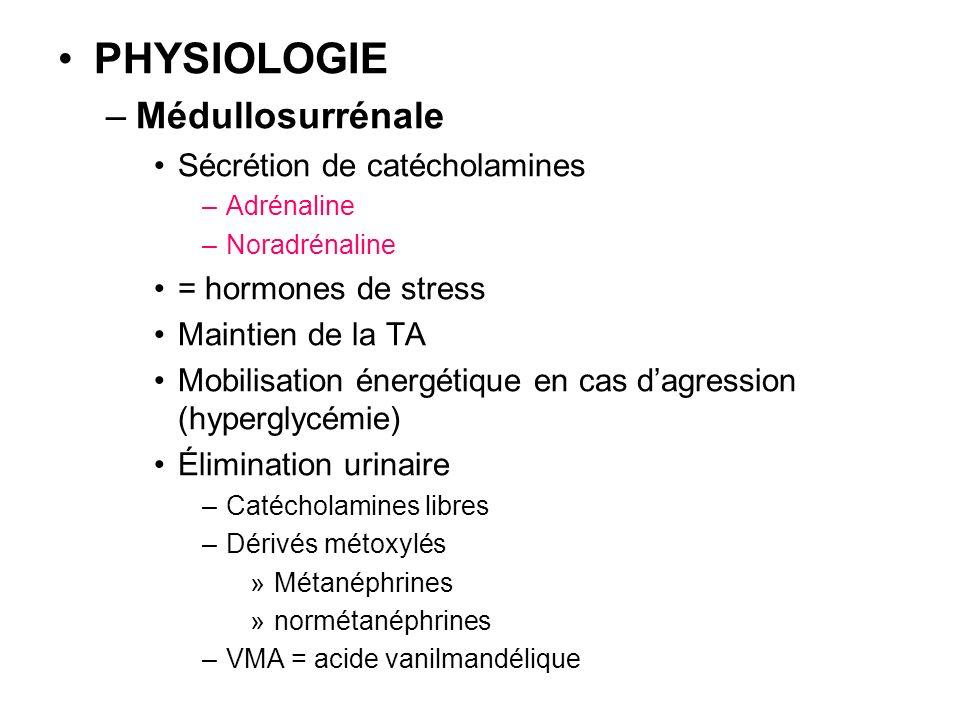 PHYSIOLOGIE –Médullosurrénale Sécrétion de catécholamines –Adrénaline –Noradrénaline = hormones de stress Maintien de la TA Mobilisation énergétique e