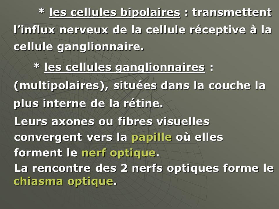 * les cellules bipolaires : transmettent linflux nerveux de la cellule réceptive à la cellule ganglionnaire. * les cellules bipolaires : transmettent