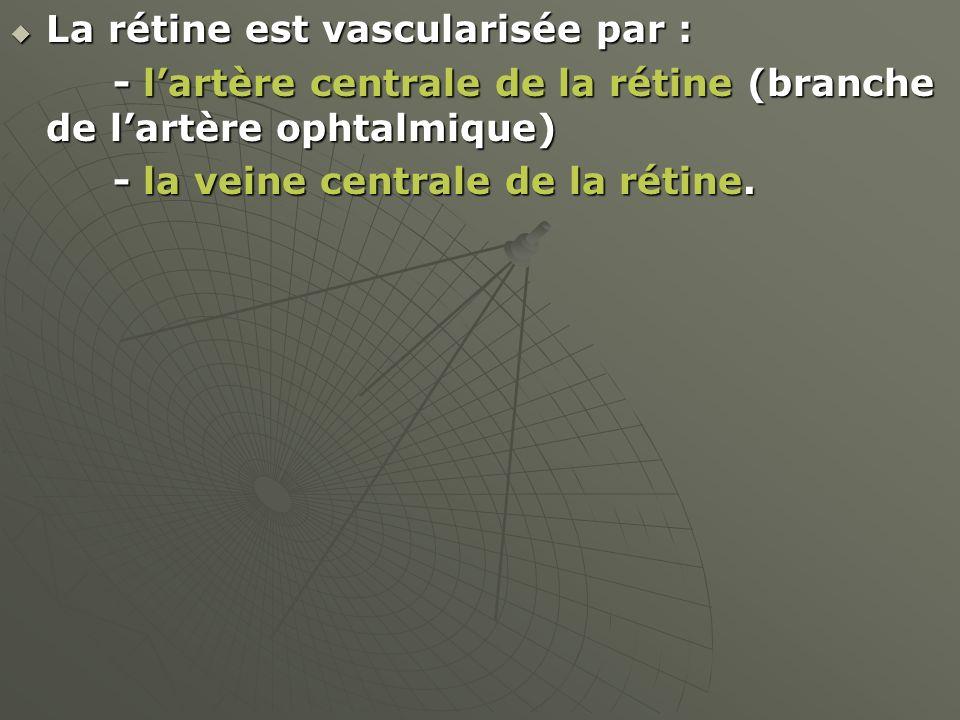 La rétine est vascularisée par : La rétine est vascularisée par : - lartère centrale de la rétine (branche de lartère ophtalmique) - lartère centrale