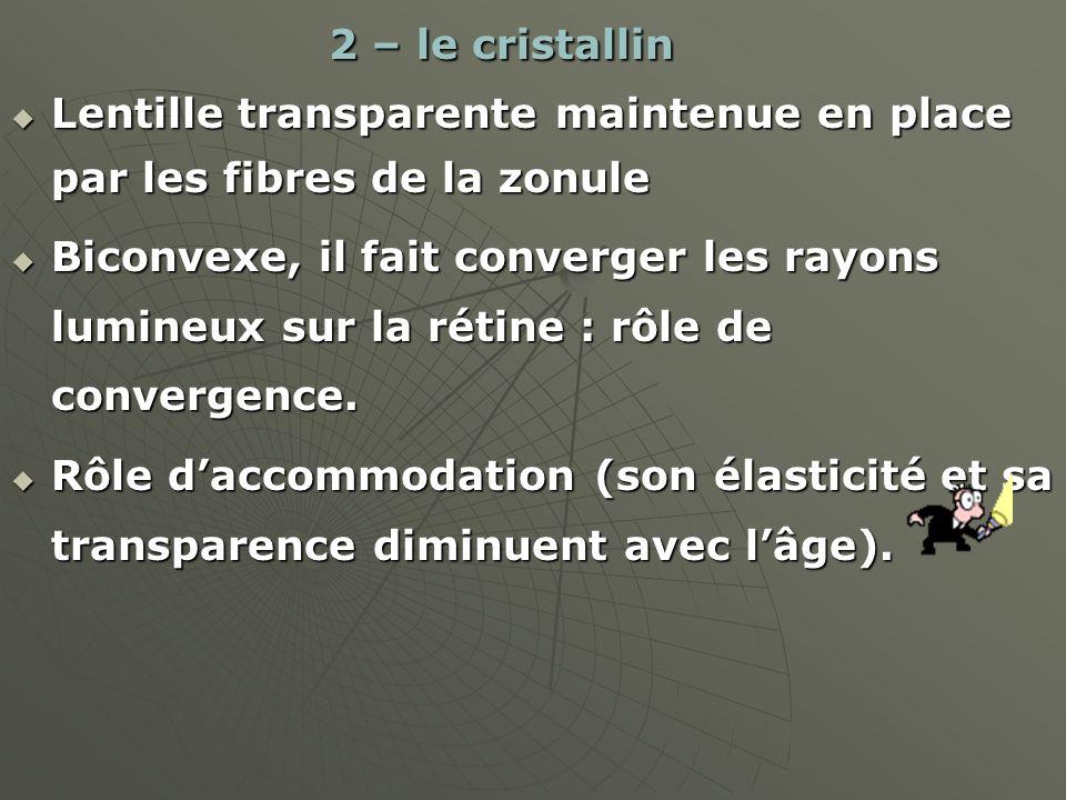 2 – le cristallin 2 – le cristallin Lentille transparente maintenue en place par les fibres de la zonule Lentille transparente maintenue en place par