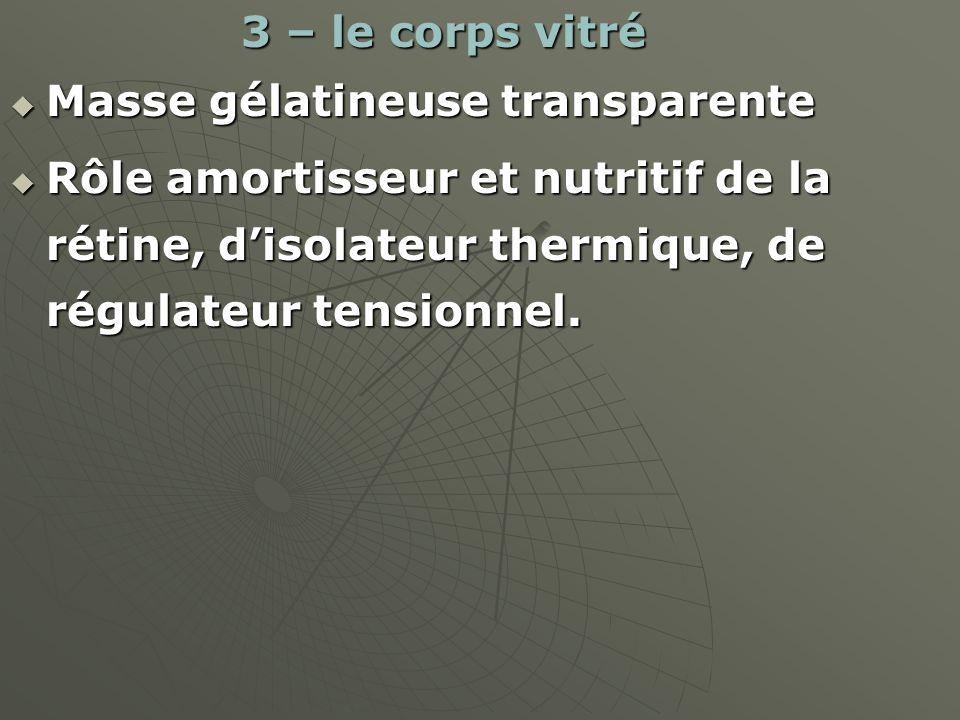 3 – le corps vitré 3 – le corps vitré Masse gélatineuse transparente Masse gélatineuse transparente Rôle amortisseur et nutritif de la rétine, disolat