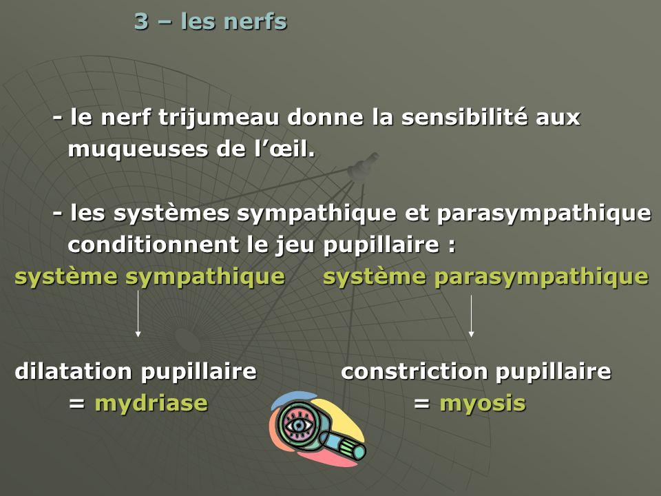 3 – les nerfs 3 – les nerfs - le nerf trijumeau donne la sensibilité aux - le nerf trijumeau donne la sensibilité aux muqueuses de lœil. muqueuses de
