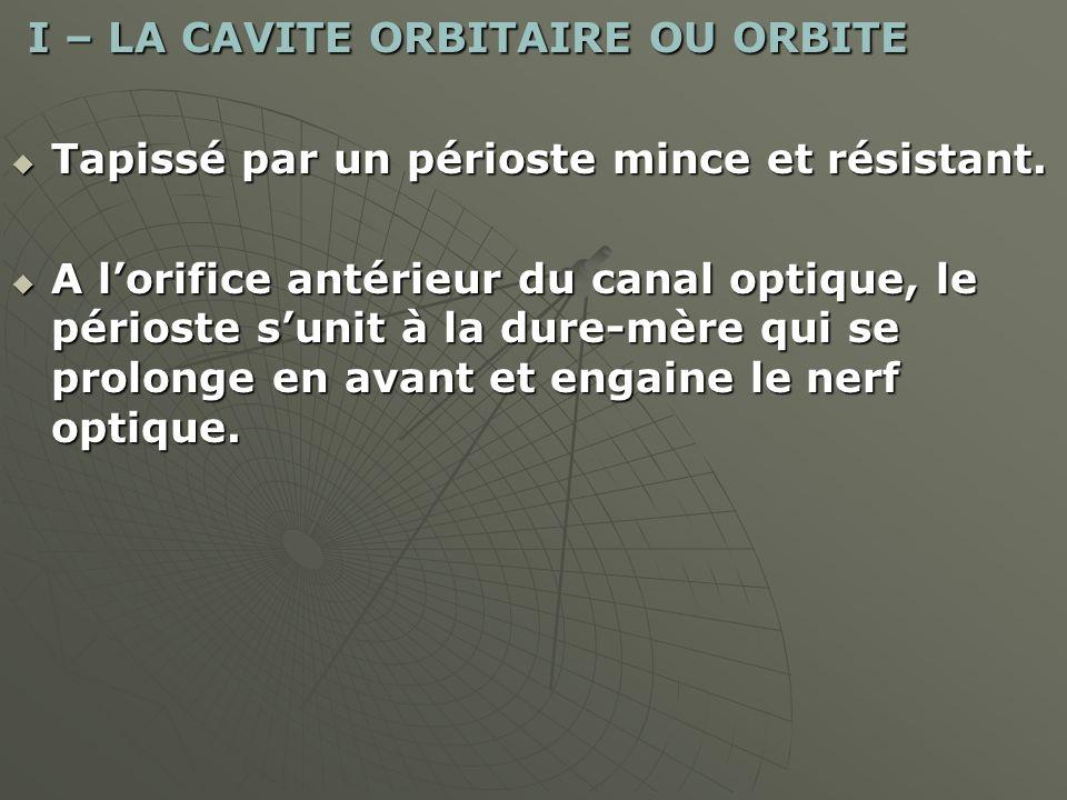 I – LA CAVITE ORBITAIRE OU ORBITE I – LA CAVITE ORBITAIRE OU ORBITE Tapissé par un périoste mince et résistant. Tapissé par un périoste mince et résis