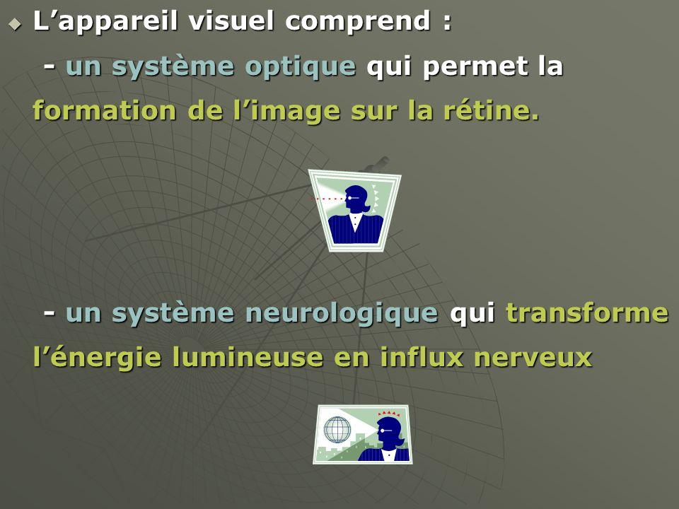 Lappareil visuel comprend : Lappareil visuel comprend : - un système optique qui permet la formation de limage sur la rétine. - un système optique qui