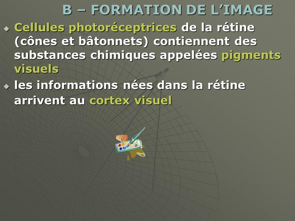 B – FORMATION DE LIMAGE B – FORMATION DE LIMAGE Cellules photoréceptrices de la rétine (cônes et bâtonnets) contiennent des substances chimiques appel