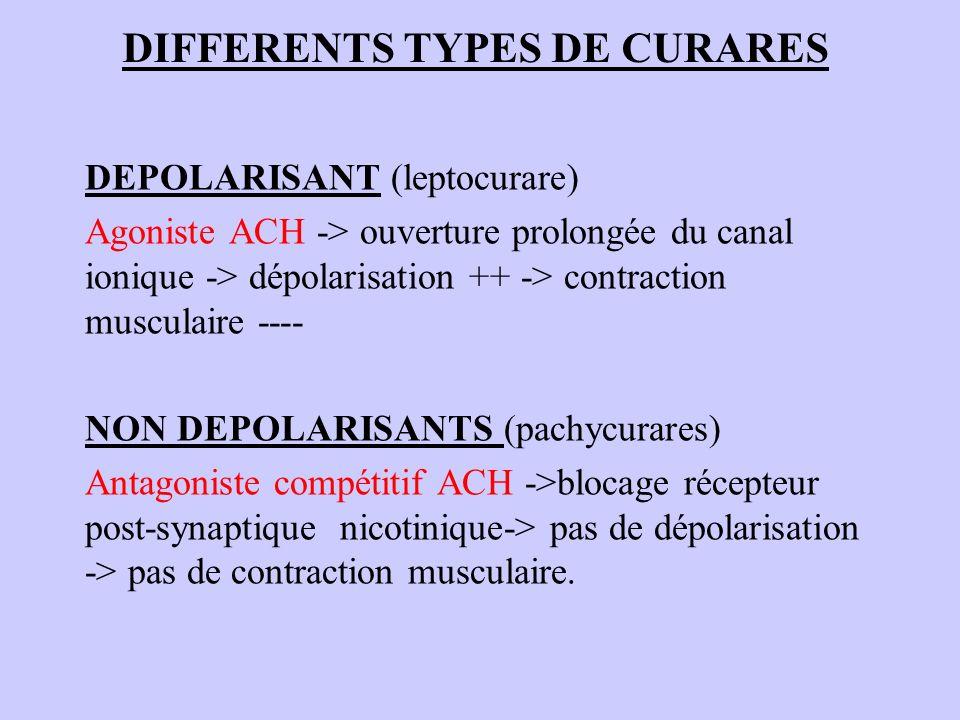 DIFFERENTS TYPES DE CURARES DEPOLARISANT (leptocurare) Agoniste ACH -> ouverture prolongée du canal ionique -> dépolarisation ++ -> contraction muscul