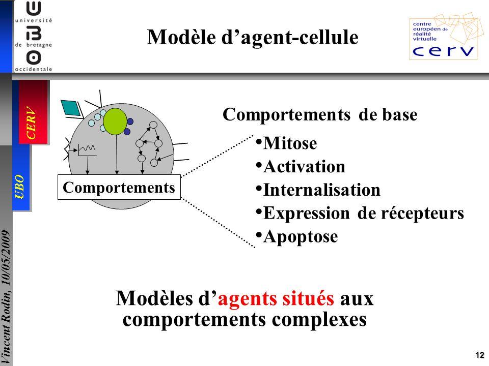 12 UBO CERV Vincent Rodin, 10/05/2009 Modèle dagent-cellule Comportements Mitose Activation Internalisation Expression de récepteurs Apoptose Comporte