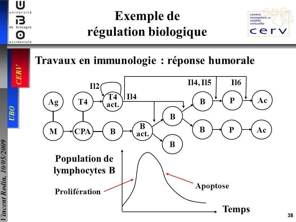 38 UBO CERV Vincent Rodin, 10/05/2009 Exemple de régulation biologique Travaux en immunologie : réponse humorale Temps Population de lymphocytes B Pro