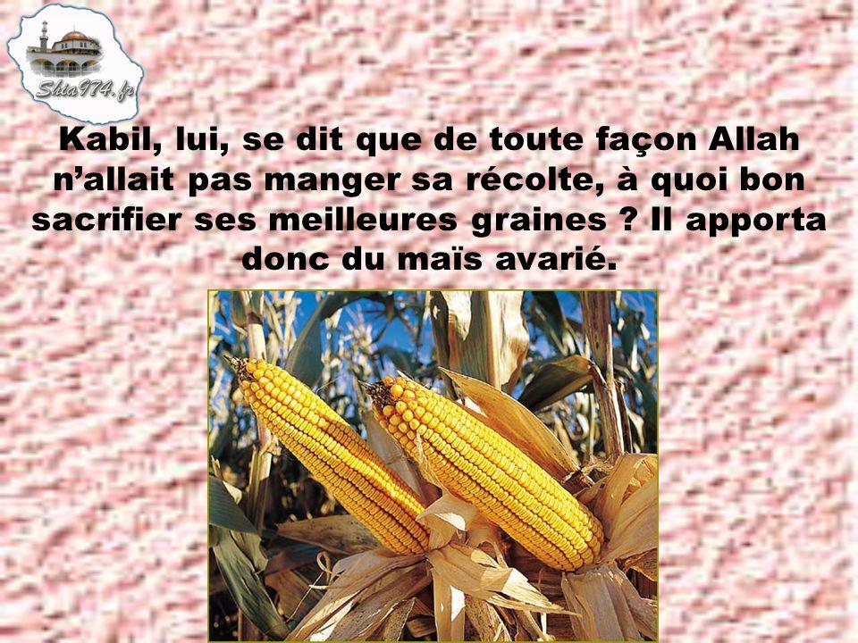 Kabil, lui, se dit que de toute façon Allah nallait pas manger sa récolte, à quoi bon sacrifier ses meilleures graines .
