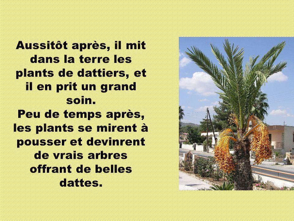 Imam Ali (as) répondit : Quelques palmiers à dattes, InshaAllah. Imam Ali (as) avait une totale confiance en Allah (swt) et il savait qu en travaillant bien et si Allah (swt) le veut, les graines de dattes deviendront rapidement des arbres.