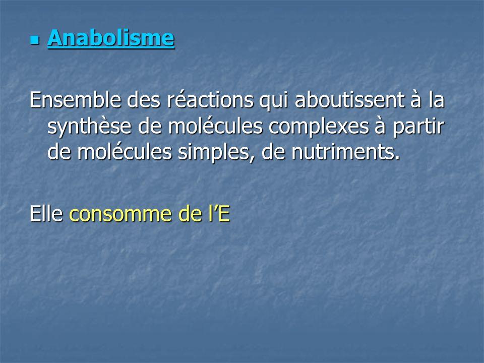 Anabolisme Anabolisme Ensemble des réactions qui aboutissent à la synthèse de molécules complexes à partir de molécules simples, de nutriments.
