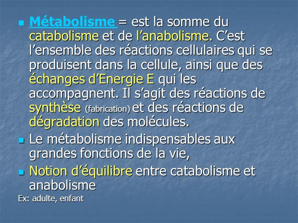 = est la somme du catabolisme et de lanabolisme.