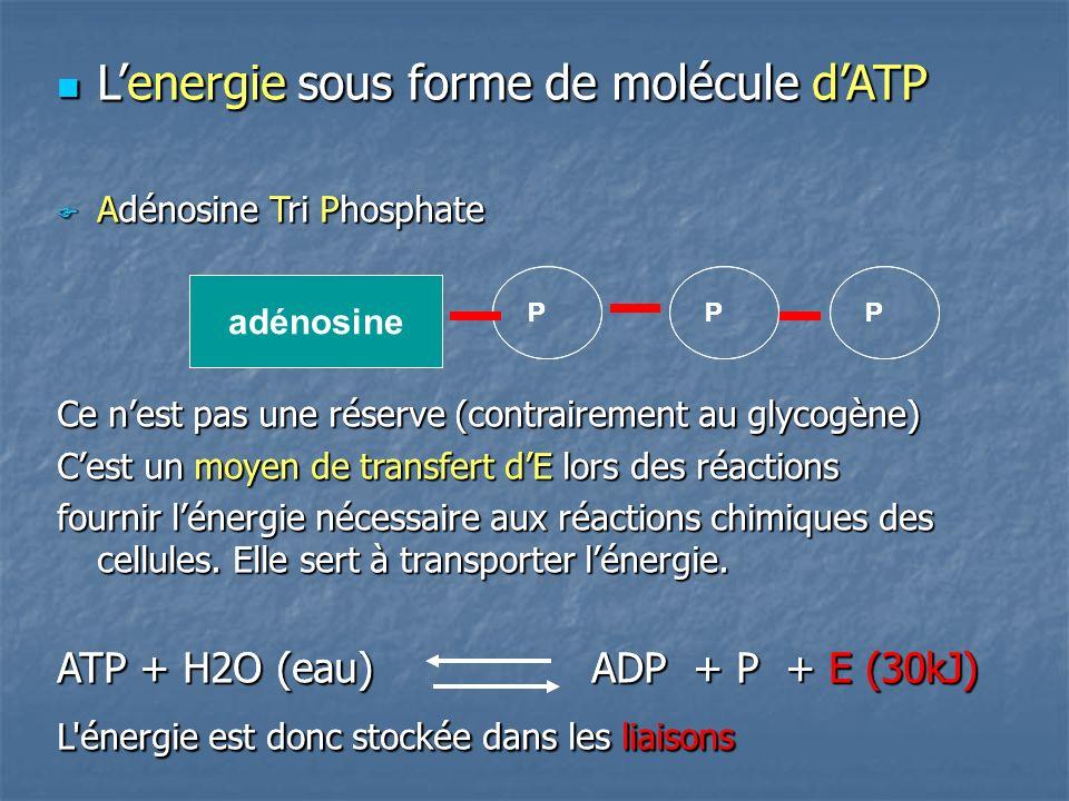 Lenergie sous forme de molécule dATP Lenergie sous forme de molécule dATP Adénosine Tri Phosphate Adénosine Tri Phosphate Ce nest pas une réserve (contrairement au glycogène) Cest un moyen de transfert dE lors des réactions fournir lénergie nécessaire aux réactions chimiques des cellules.