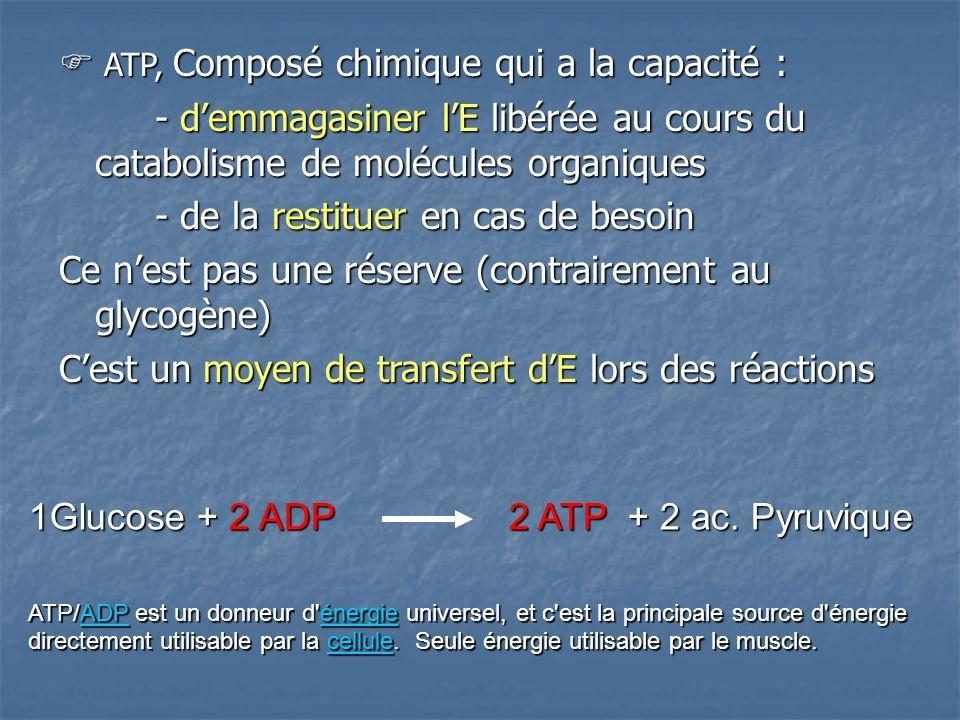 ATP, Composé chimique qui a la capacité : ATP, Composé chimique qui a la capacité : - demmagasiner lE libérée au cours du catabolisme de molécules organiques - de la restituer en cas de besoin Ce nest pas une réserve (contrairement au glycogène) Cest un moyen de transfert dE lors des réactions 1Glucose + 2 ADP2 ATP + 2 ac.