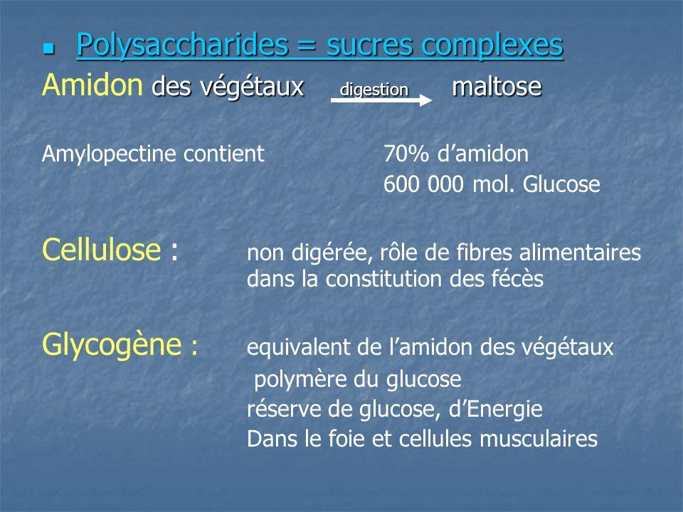 Polysaccharides = sucres complexes Polysaccharides = sucres complexes des végétaux digestion maltose Amidon des végétaux digestion maltose Amylopectine contient 70% damidon 600 000 mol.