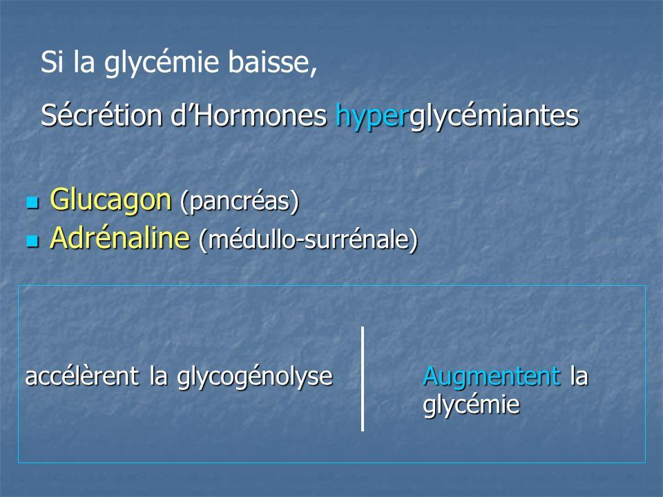 Glucagon (pancréas) Glucagon (pancréas) Adrénaline (médullo-surrénale) Adrénaline (médullo-surrénale) accélèrent la glycogénolyseAugmentent la glycémie Si la glycémie baisse, Sécrétion dHormones hyperglycémiantes